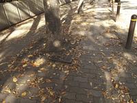 街頭の落葉