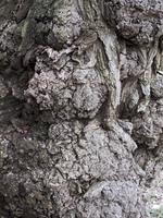 古木の樹皮