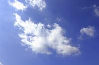秋空にポッカリ浮いた白い雲