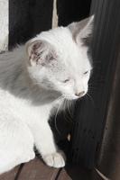 日なたぼっこをする野良猫