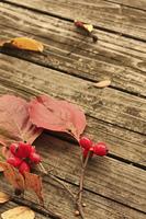 木のテーブルの上の落葉