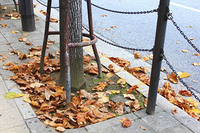 枯葉が落ちた歩道