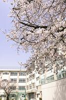 校庭に咲くサクラ