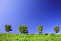 芝生と樹木