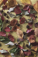 ドングリと葉っぱ