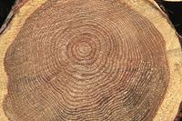 木材の丸太