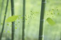 竹林と葉っぱ