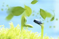 新芽と葉っぱ