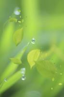 水滴と葉っぱ