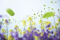 菜の花と葉っぱ