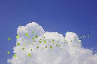 入道雲と葉っぱ