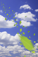 青空と葉っぱ