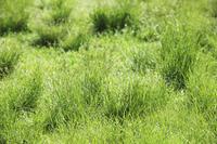 草原の葉っぱ