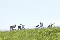 草原と自転車
