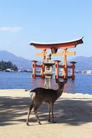 宮島の大鳥居と鹿
