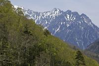 新緑の安房峠から穂高連峰を臨む