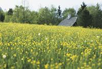 草原のコテージ