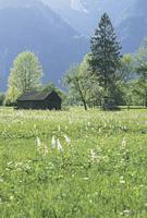 山間の草原