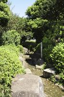 西郷山公園の小川