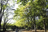 代々木公園の並木道