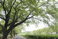 野川の遊歩道