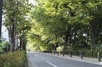 下連雀通りの並木