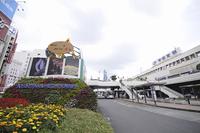 宇都宮駅前の花壇