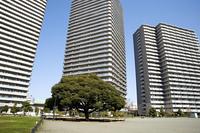タワーマンションと木