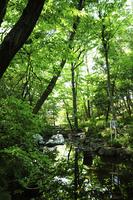おとめ山公園の池