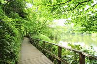 石神井公園の遊歩道