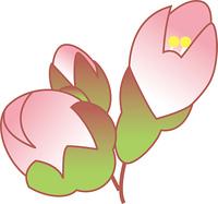 ふくらんだ桜のつぼみ