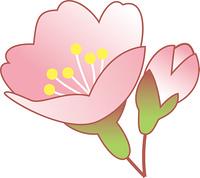 咲き始めの桜の花