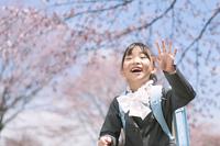 桜の前で手を振る小学生