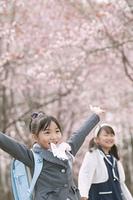 桜の前で両手を挙げる小学生