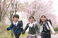 桜並木道を走る小学生