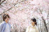 桜の前で微笑むカップル