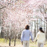 桜の前で手をつなぐカップルの後姿