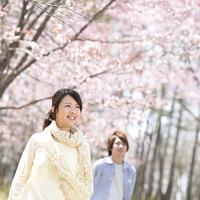 桜を見上げるカップル