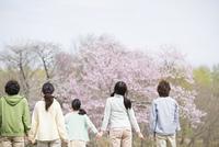 桜を見る若者たちの後姿