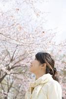 桜を見上げる女性の横顔