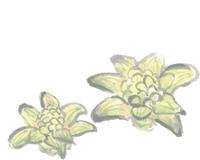 水彩画イラスト素材集1