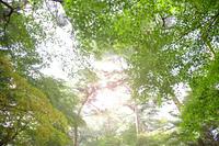 神戸再度公園