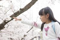 桜に手をのばす小学生