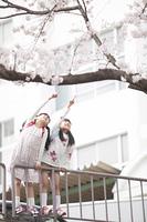 桜を指差す小学生
