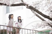 桜を見つめる小学生