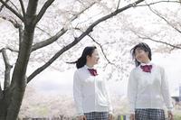 桜をバックに話す高校生