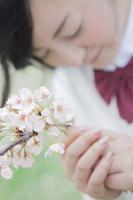 桜の前で願い事をする高校生