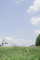 草原の地面