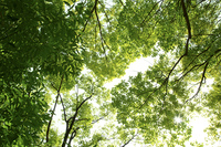 木 葉 森林