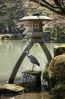 兼六園 ことじ灯籠と鷺